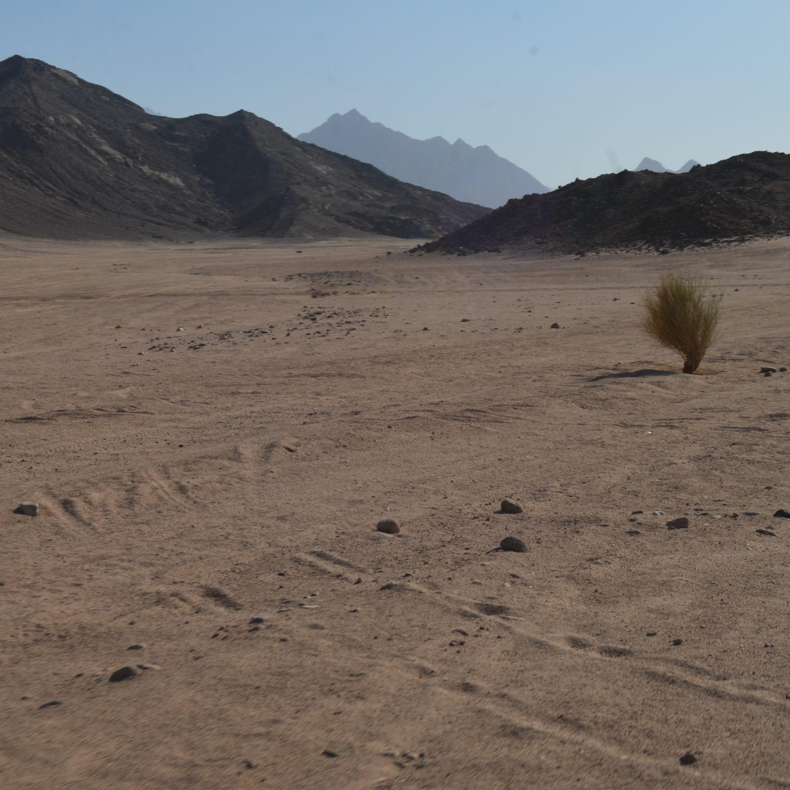 7:30 - 8:30 Wüste BIS QUENA: